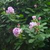 これが咲いてくると、春の開花は一段落