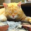 【猫島】青島へのアクセスは定期便で、ネコの楽園青島の写真