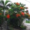 ちょっと道草 210320  写真で Go to西表島(9 民家の門 学校の門