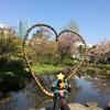 六本木ヒルズ毛利庭園の桜はもう散りかけ