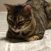 日経新聞を読む猫