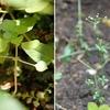 *5月の庭の植物