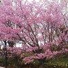 えぃじーちゃんのぶらり旅ブログ~コロナで足止め2020年5月上旬 北海道石狩市編 その2