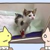 生まれて間もない子猫を保護、実は3000匹に1匹の奇跡だった