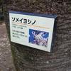 冬場の虫の隠れ家 樹名板の裏を探してみよう