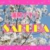 潮来市の桜、満開です!