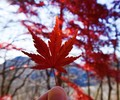 登山はやっぱり秋が一番!