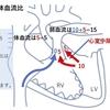 Qp/Qs(肺体血流比)について考えよう! 基本5