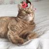 写真アプリSNOWに猫専用機能があるんですって?