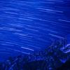 剱岳の夏登山 その6 池ノ平で満喫編(池ノ平小屋〜池ノ平山トレッキング)