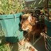 秋の気配 雑草生い茂る庭を探検する猫
