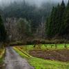 霧と果樹園