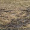 【考え方編】来年は不耕起田んぼを広げようと思います!