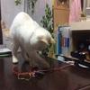迷い猫 茶々丸③