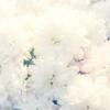 まっしろな花のようにいつでも咲きなおす 開花アファメーション - 1 だって私は○○○🌻