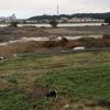 多摩川レポート