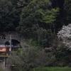 通達119 「 山陰本線検測のクモヤ443を山桜と絡めて狙う 」