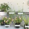 夏のコーナー花壇