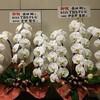 坂本昌行「BOY FROM OZ」決定おめでとう