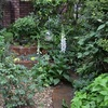 霧雨の中の鉢植えとフォックスグローブ