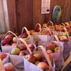 果樹園 Jackson's Orchard にシーズンのリンゴを買いに行きました… もう少し若かったら、リンゴ狩りをしたんですがね…