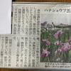 三重のお散歩〜津市安濃町の伊勢花しょうぶ園