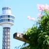 横浜市みなとみらい駅周辺その7~横浜マリンタワーは妬みの墓場(笑)~