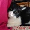 今日の黒猫モモ&白黒猫ナナの動画ー974