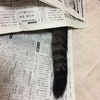 大好きなぬいぐるみの手術を固唾を呑んで見守る猫