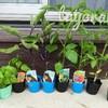 トマト・ナス・ピーマン・キュウリ・バジルなど夏野菜の苗植えました!