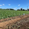 千葉県の成田ファームランドで芋掘り!バーベキューもバームクーヘンも大人気、収穫体験が手軽に楽しめる!