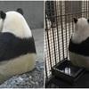 'パンダ'が寂しく座っている理由