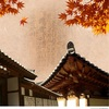 【韓国文化】日本はサムライ精神!韓国はソンビ精神?!