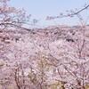 桜さくら、一粒万倍日追記