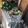 4ヶ月前の花壇のビフォーとアフター