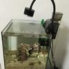 30cmキューブ海水水槽の器具類の紹介