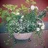 5月の寄せ植え -ミニバラの寄せ植えー