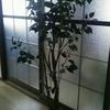 【捨てたもの】フェイクの観葉植物(台所の画像あり)