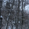 儚きは春の雪