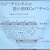 鍼灸の授業記録~20191102~