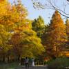 LEICA DG VARIO-ELMARIT 50-200mm/F2.8-4.0 で馬見丘陵公園の秋を撮りました
