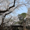 多摩川桜百景 -8. 多摩川台公園-