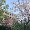卯の花月  杜の都