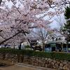 路地裏桜2017~「堀川遊歩道」と『やすらい祭り』