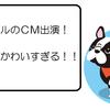 【川口春奈出演CM】QTモバイルのCMがかわいすぎる!