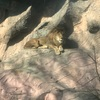 東山動植物園はコスパ最強のデートスポットだと思うんだ