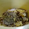 日本蜜蜂の垂れミツ