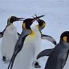 【一日一枚写真】ペンギン達の行列②【一眼レフ】