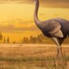 人類は2百万年前、巨大な鳥を食べていた?