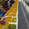 mangoの 季節が やってきました!
